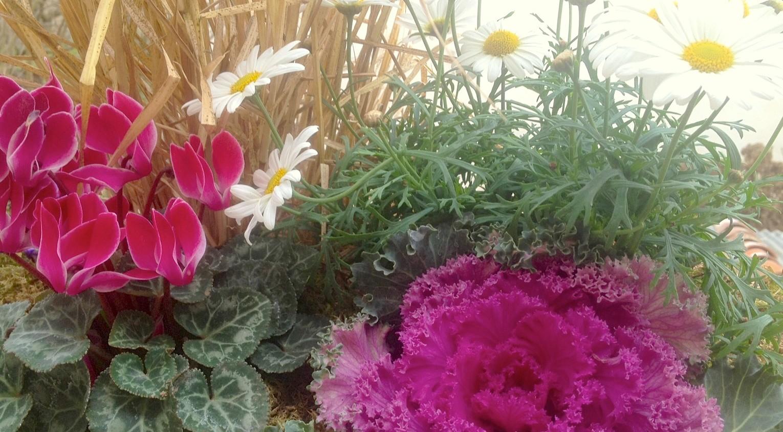 Un ramito de flores para equilibrar tus emociones